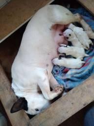 Filhotes disponíveis para reserva entrega no natal