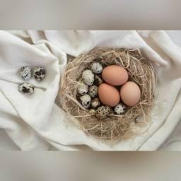 Ovos de Codorna e de Galinha Caipira