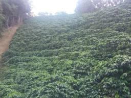 Terreno de café em Manhuaçu Ponte do Silva MG