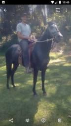 Cavalo top na marcha picada !!!