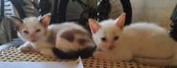 Gatinhos disponíveis  para adoção.