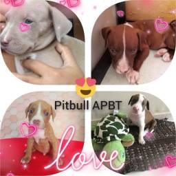 Título do anúncio: Pitbull APBT