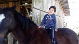 Cavalo Manga-larga marchador