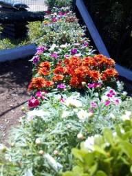 Floricultura Rodrigues,Grama,plantas ornamentais,vasos ,terra preta