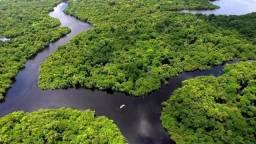 Área de 64.000 hectares na amazônia 44.800,000