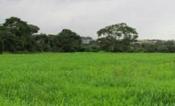 Vendo terras parceladas