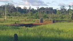 Fazenda com 280 hectares em Rorainópolis/RR, ler descrição do anuncio