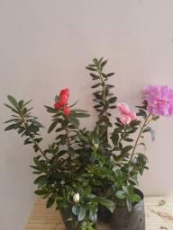 Plantas de corte e flores ornamentais