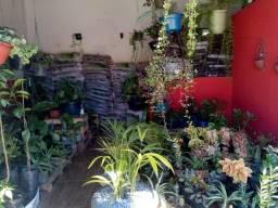 Vendo plantas,adudos,
