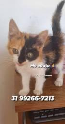 Adote um gatinho