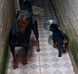 cachorro rot Vale