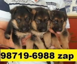 Filhotes Cães Incríveis BH Pastor Boxer Dálmatas Labrador Golden Rottweiler Akita