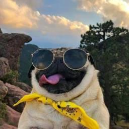 Passeadora de cães (DogWalker)