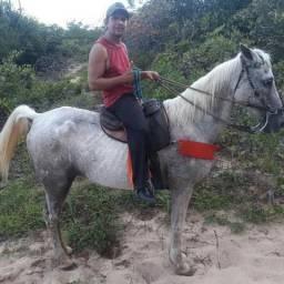 Cavalo de direita com 10anos para vender ou trocar