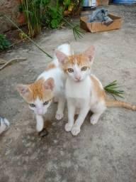 Doaçao de gatos