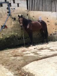 Cavalo manga larga marcha pikada 7000