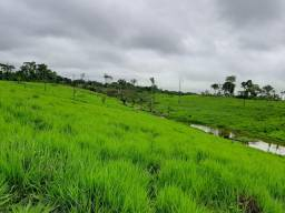 Vendo terra, 110 hectares impecável.