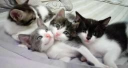 Doa-se gatinhos super fofos