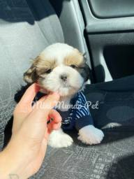 Ursinho MINI cute cute