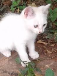 Doação de gatinho(a)