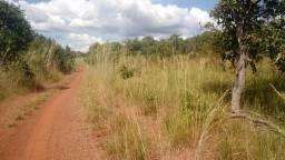 Fazenda 572 alqueire em araguacema Tocantins