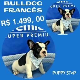 Filhote de Bulldog Francês Macho # Microchipe # Parcelado 12X