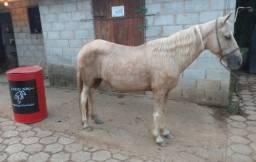 Égua marcha Picada!!!
