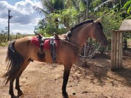 Cavalo Campolino Mangalarga