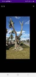 Cortes de árvores e podas