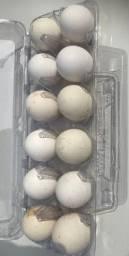 Ovos frescos e galados de Cara de Palhaço