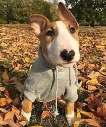 Bull terrier filhotinhos com pedigree e garantias de saúde!