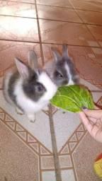 Título do anúncio: Filhote de coelho