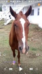 Cavalo pra vender rápido