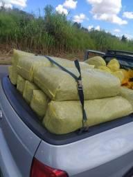 Silagem de milho em Ribeirão preto