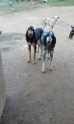 Cachorro Urrador