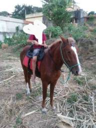Dois cavalo macha Batida