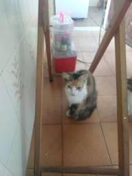 Doação de gata
