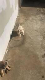Doa-se cães carinhosos