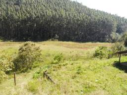 Área com eucalipto: a partir de 80 alqueires! Vale do Paraíba