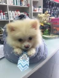 Título do anúncio: Rei dog, com pedigree, em 1ox sem juros