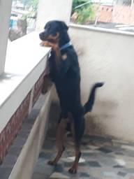 Doação de um cachorro
