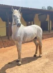 Título do anúncio: Cavalo registro top !!!