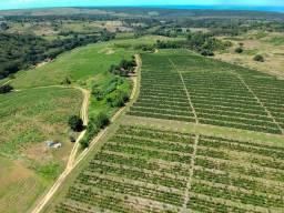 Título do anúncio: 75 hectares de terra