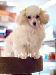Título do anúncio: Linda Filhote de Poodle micro branca disponível.