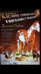 Cavalo de Direita Paint Horse