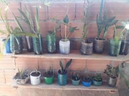 Plantas a partir de 10 reais
