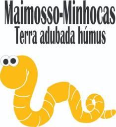 Minhocas em Ribeirão Preto