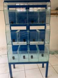 Aquários ( bateria de aquários )
