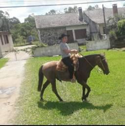 Cavalo perche com criolo