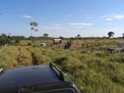 Fazenda com 1.000he c/ 80% formado, 50km de Cuiabá